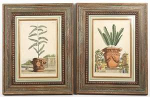 Pair of A Munting Engravings of Plants 17th C