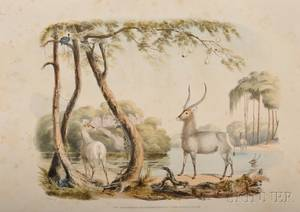 Harris William Cornwallis Sr Portraits of the Game and Wild Animals of Southern Africa Delineated from Life in their Native Haunts