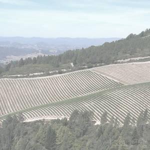 Ponsot Clos de la Roche Vieilles Vignes 1996