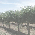 Mixed California Cabernet