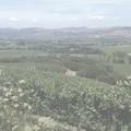 Chalone Vineyards Reserve Estate Chardonnay 1994