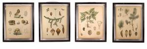 Group of Four Botanical Hand Colored Engravings