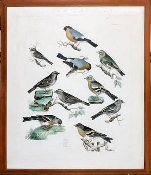 HAND COLORED ETCHING OF BIRDS