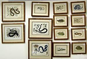 Group of 13 handcolored snake engravings in birdseye maple frames