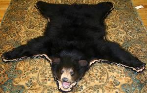 070173 NORTH AMERICAN BLACK BEAR RUG W 54 L 58