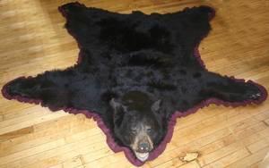 070164 NORTH AMERICAN BLACK BEAR RUG L 84 D 76