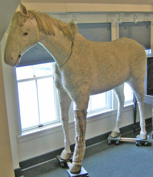 Life size composition figure of a horse