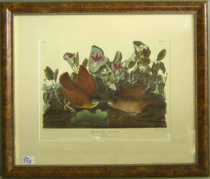 Contemporary Audubon print