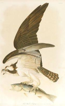 Audubon John James 17851851