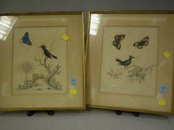 Pair of Framed Handcolored Prints of the Crested Hummingbird with Butterflies and the Black White and Red Indian Creeper
