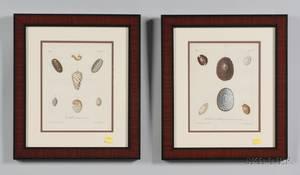 Twelve Framed German Hand Colored Conchological Book Plate Engravings