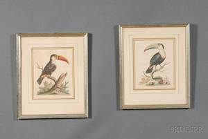 Pair of Decorative Hand Colored Ornithological Prints