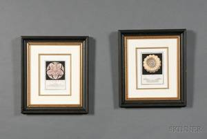 Group of Eight Framed Italian Handcolored Engravings of Architectural Rosettes