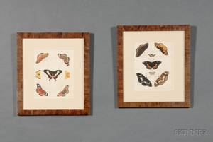 Group of Eight French Handcolored Engravings of Butterflies