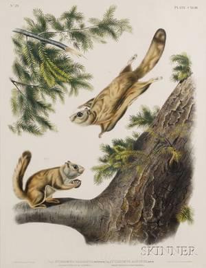 Audubon John James 17851851  Audubon John Woodhouse 18121862