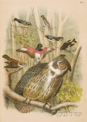 Ornithology Studer Jacob Henry