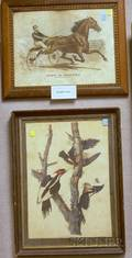 Lot of Five Framed Engravings Lithographs and Offset Prints Depicting Birds and Horse Races