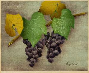 Luigi Rist American 18881959 Two Bunches of Grapes
