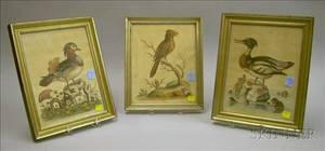 Three Framed George Edward Handcolored Lithograph Bird Prints