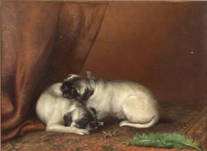 British School 19th Century Two Resting Pug Pups
