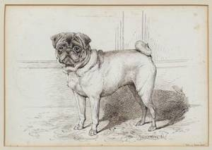 British School 19th Century Neil of Swarland A Pug Portrait