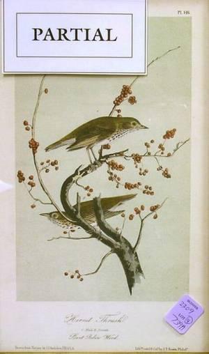 Lot of Four Framed Audubon Prints