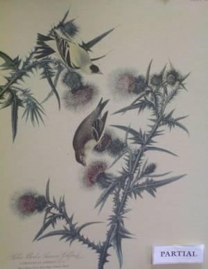 Lot of Six Framed Reproduction Audubon Prints