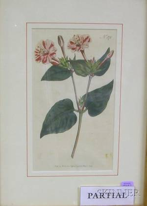 Group of Six Framed Handcolored Botanical Prints