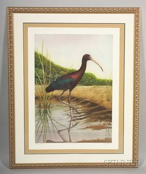 John Costin American 20th Century Large Framed Handcolored Etching of a Glossy Ibis