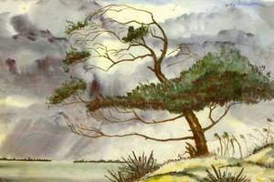 Framed Watercolor of a Tree on a Shoreline