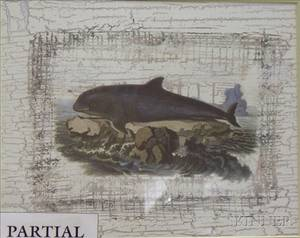 Four Framed Decorative Prints of Whales and Dolphins
