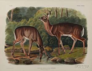 Audubon John Woodhouse 18121862