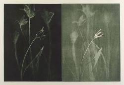 Michael Mazur American b 1935 Tulip Pair