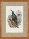 Two Gould  Hart color bird lithographs