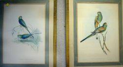 Two Framed Prints After Gould