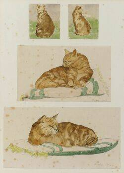 American School 20th Century Four Studies of an Orange Cat
