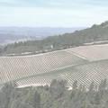 Chateau Brane Cantenac 1982 2 bottles