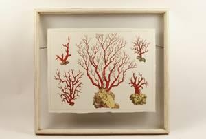 Hand Colored Coral Engraving After Albertus Seba