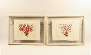 Pair of Coral Engravings After Albertus Seba