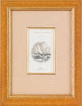 Set of fourteen whaling prints from  The Naturalists Library