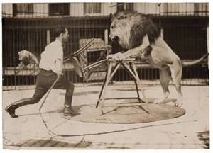 Group of Three Photographs of Circus Lions Including a