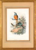 Three Gould  Richter color bird lithographs