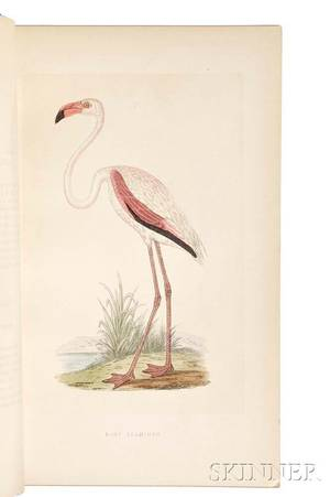 Bree Charles Robert 18111886 A History of the Birds of Europe Not Observed in the British Isles