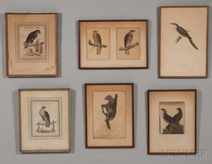 European and American Schools 18th19th Century Seven Framed Prints Five Birds of Prey including two by George Edwards British 169