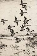 Frank Weston Benson American 18621951 Pintails Passing