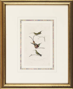 Three color bird engravings by Travies
