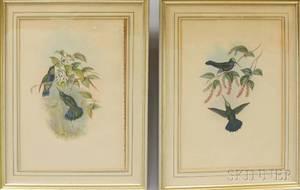 Pair of Framed Gould Richter Bird Prints