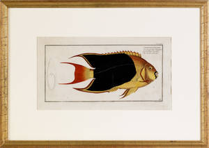 Two color engravings of fish