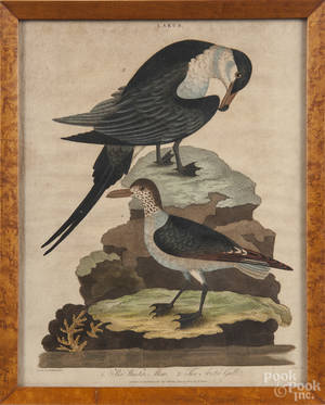 Three color ornithological engravings by J Pass