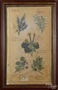 Oil on canvas botanical study